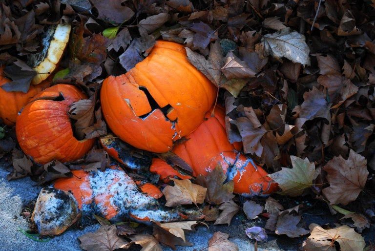 Discarded pumpkins.