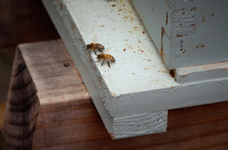 bees talking