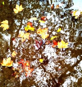 puddle.2 - Copy