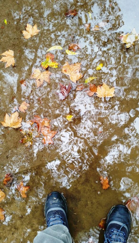puddle.2