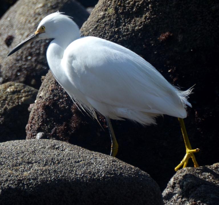 Egret.2 - Copy