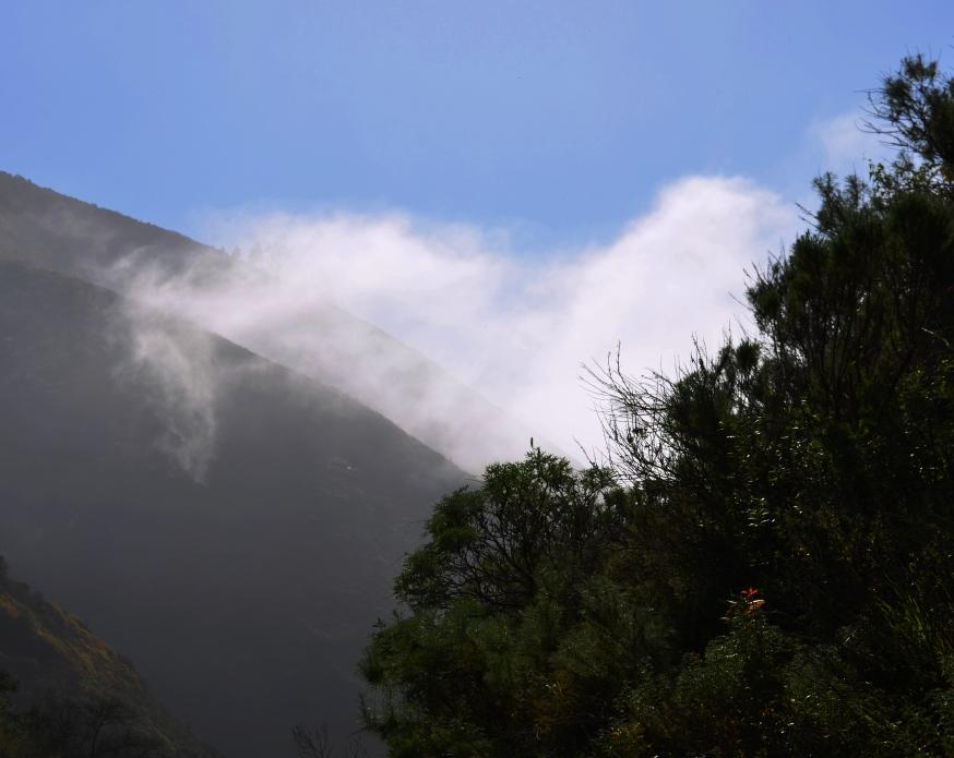 Garrapata fog