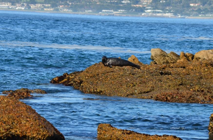 sea lion.1