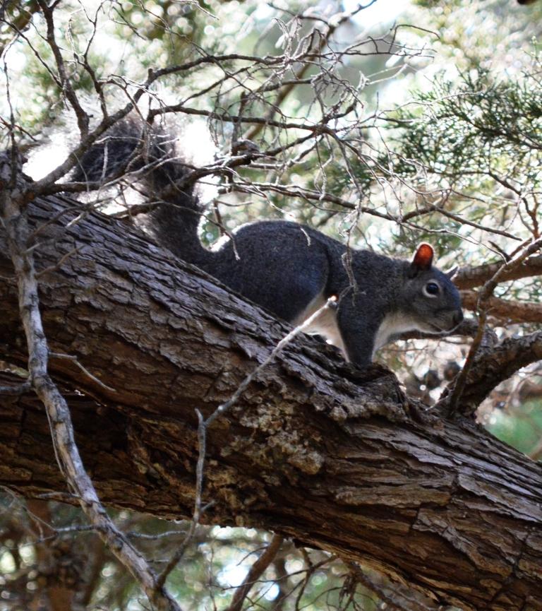 squirrel.2