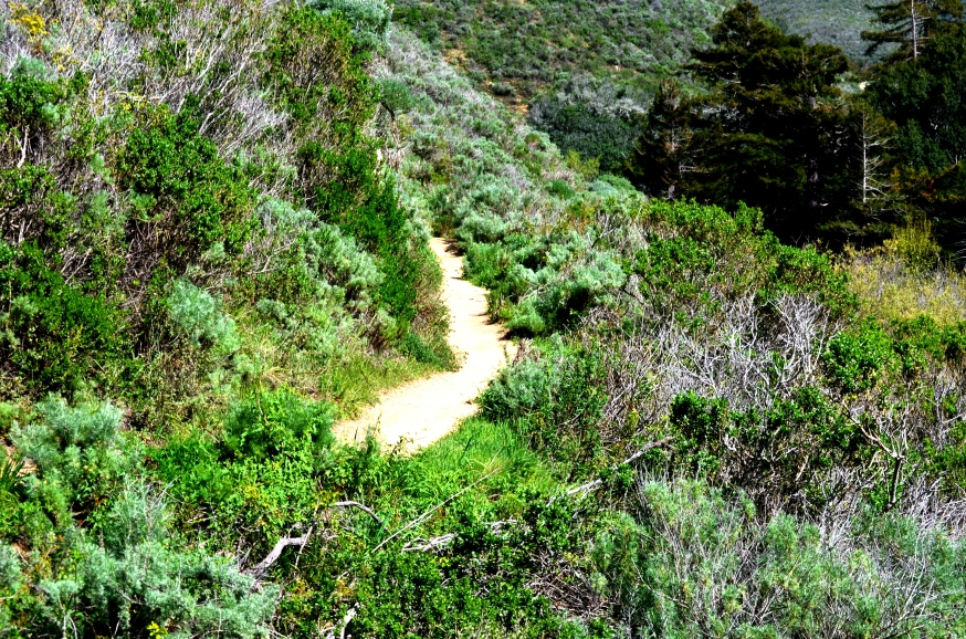 soberanes trail.7