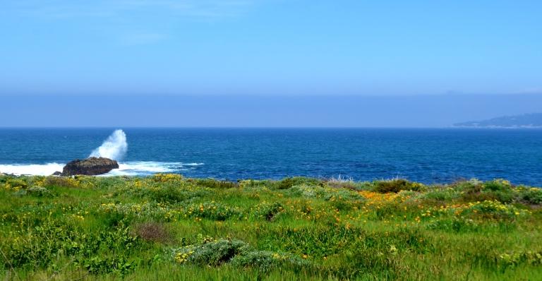 Point Lobos Poppies - Copy - Copy