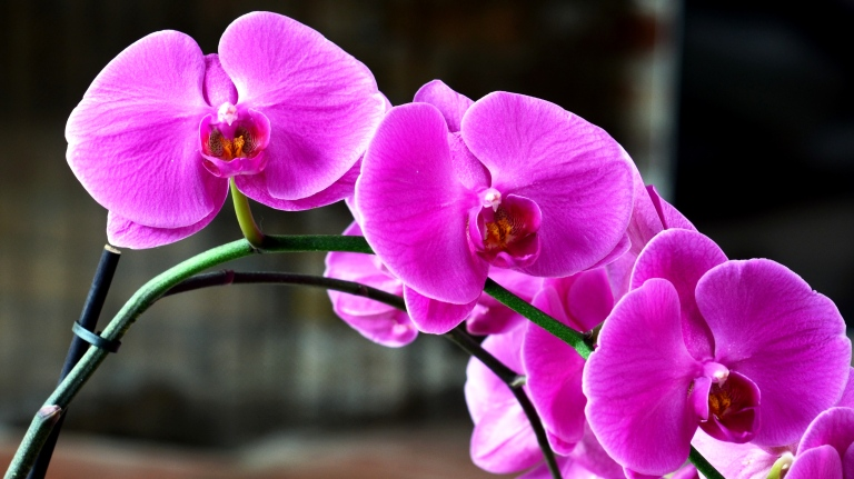 orchid - Copy