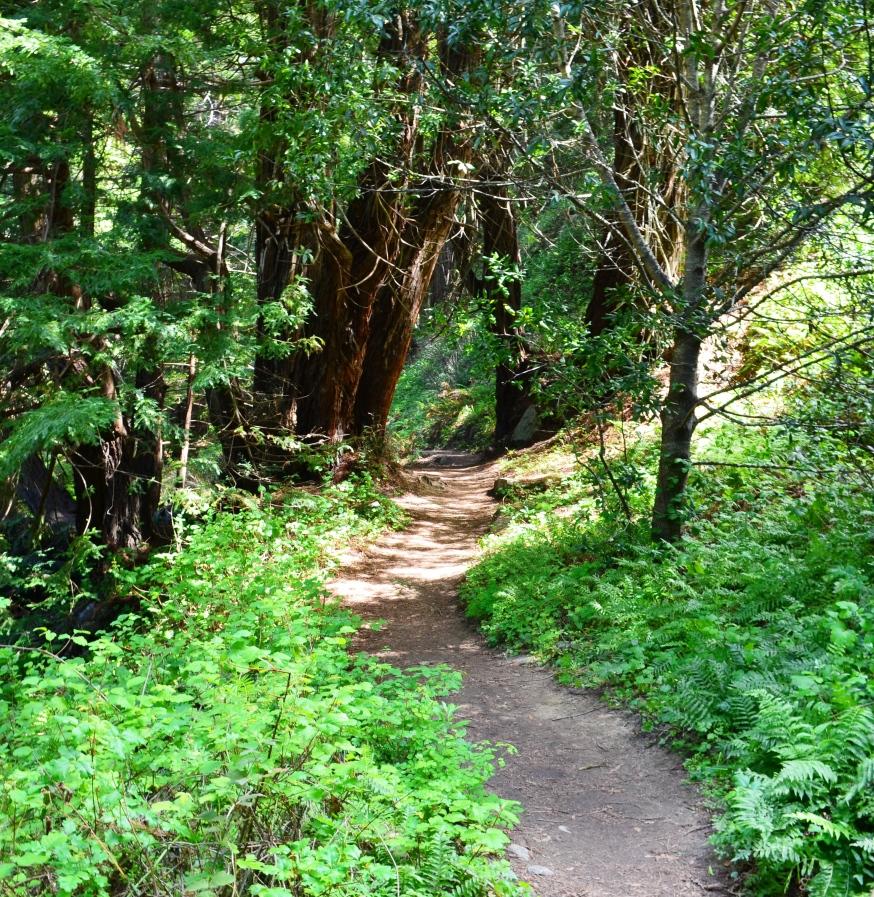 path.6