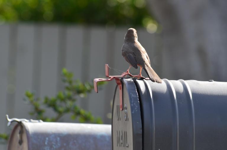 bird-mail
