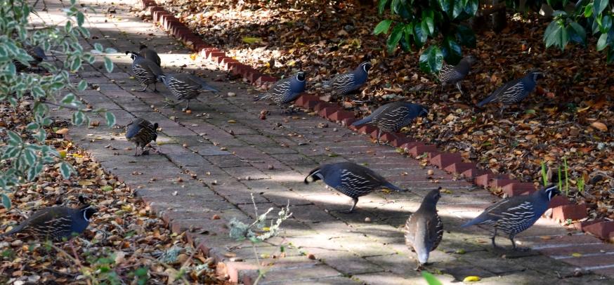 quail-time