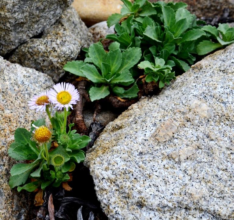 flowers amid rocks