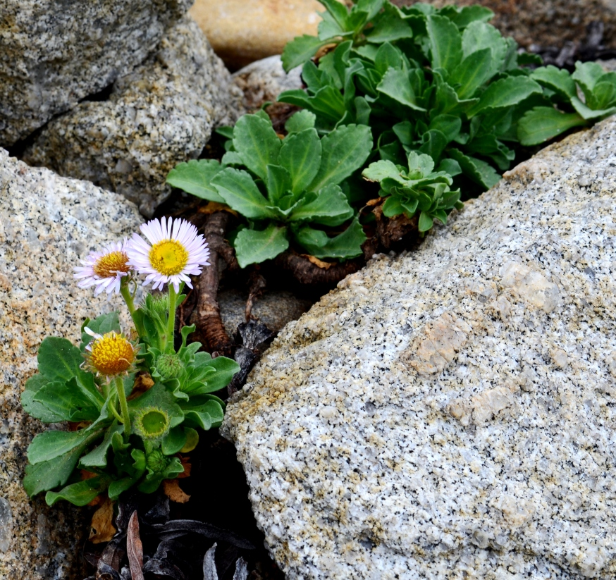 flowers amid rocks