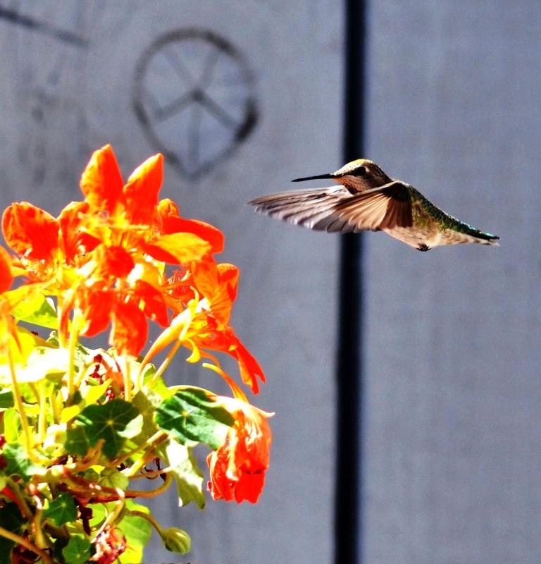 humming bird whammy