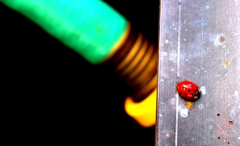 lady bug and hose