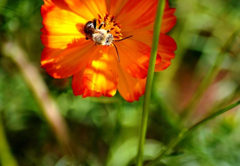 bee in flower2