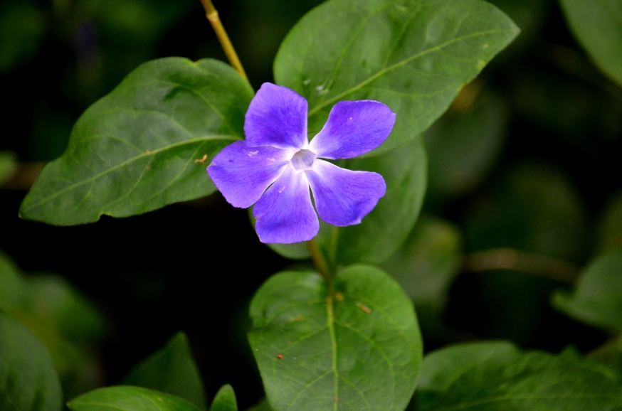 blue flower - Copy