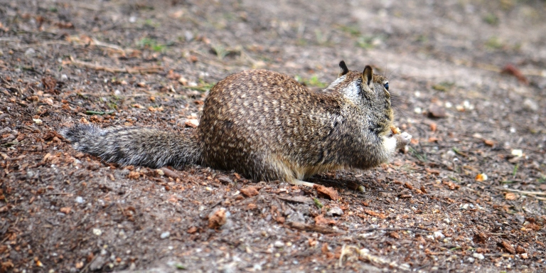 squirrel two