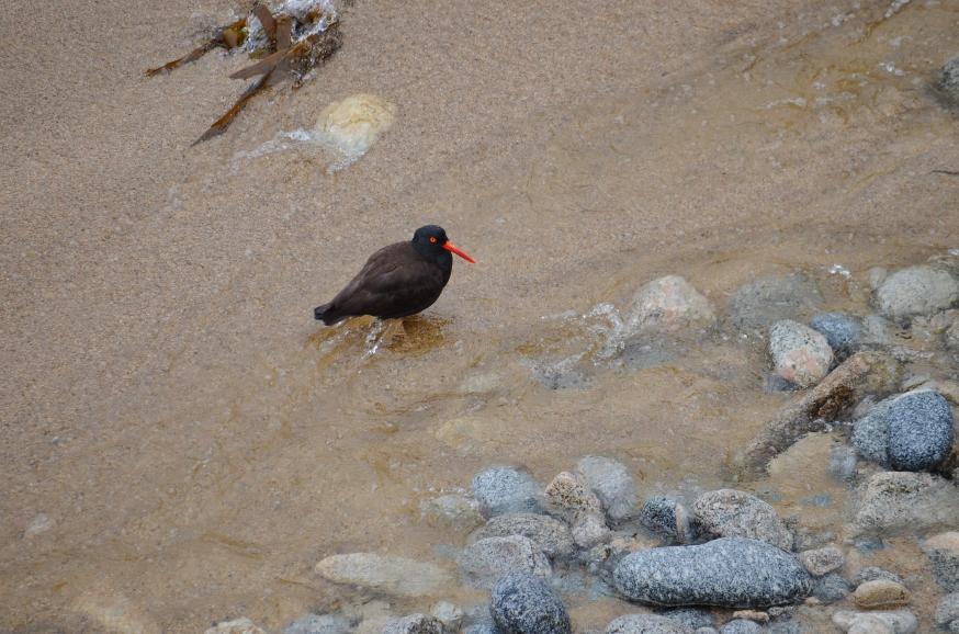 garapatta bird2
