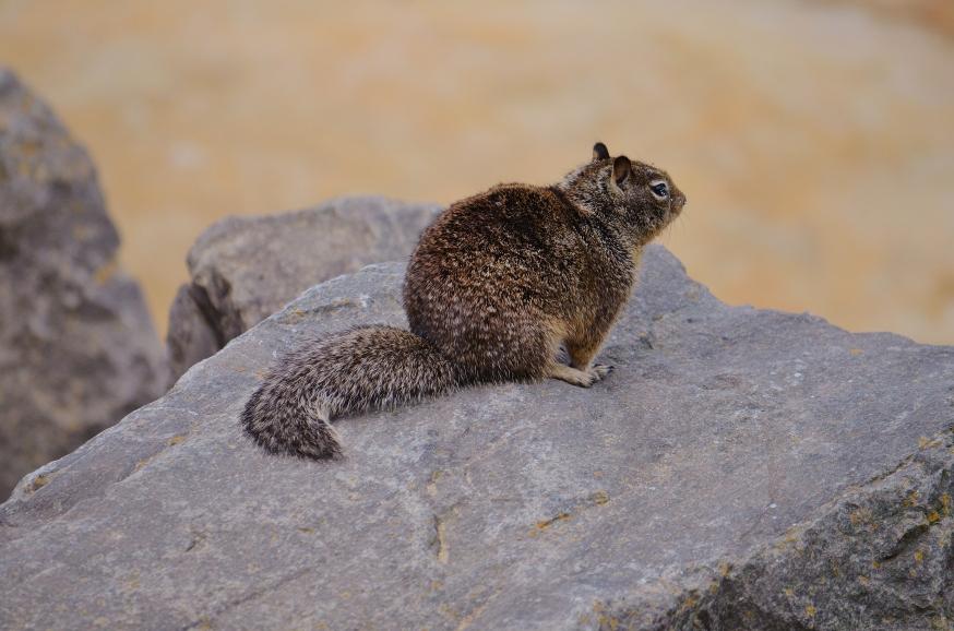 squirrel at beach