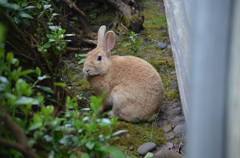 Cannon bunny
