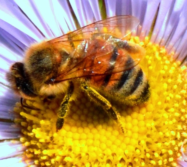 bee on flowr 3
