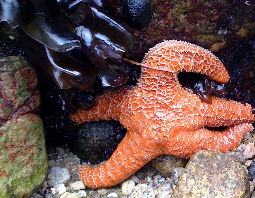up close starfish - Copy - Copy