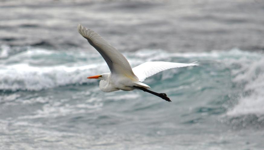 egret - Copy