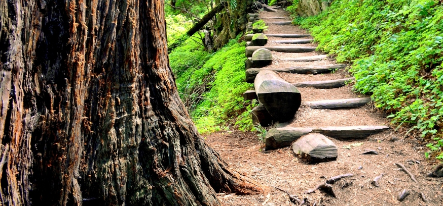 path.2 - Copy.JPG