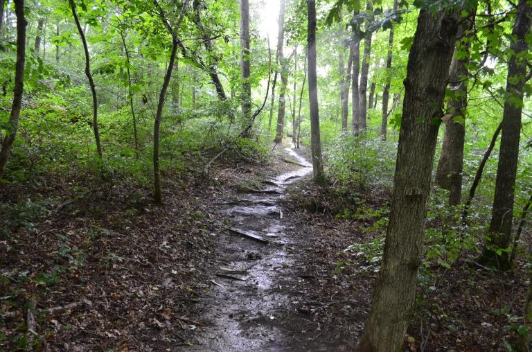 path.wet.JPG