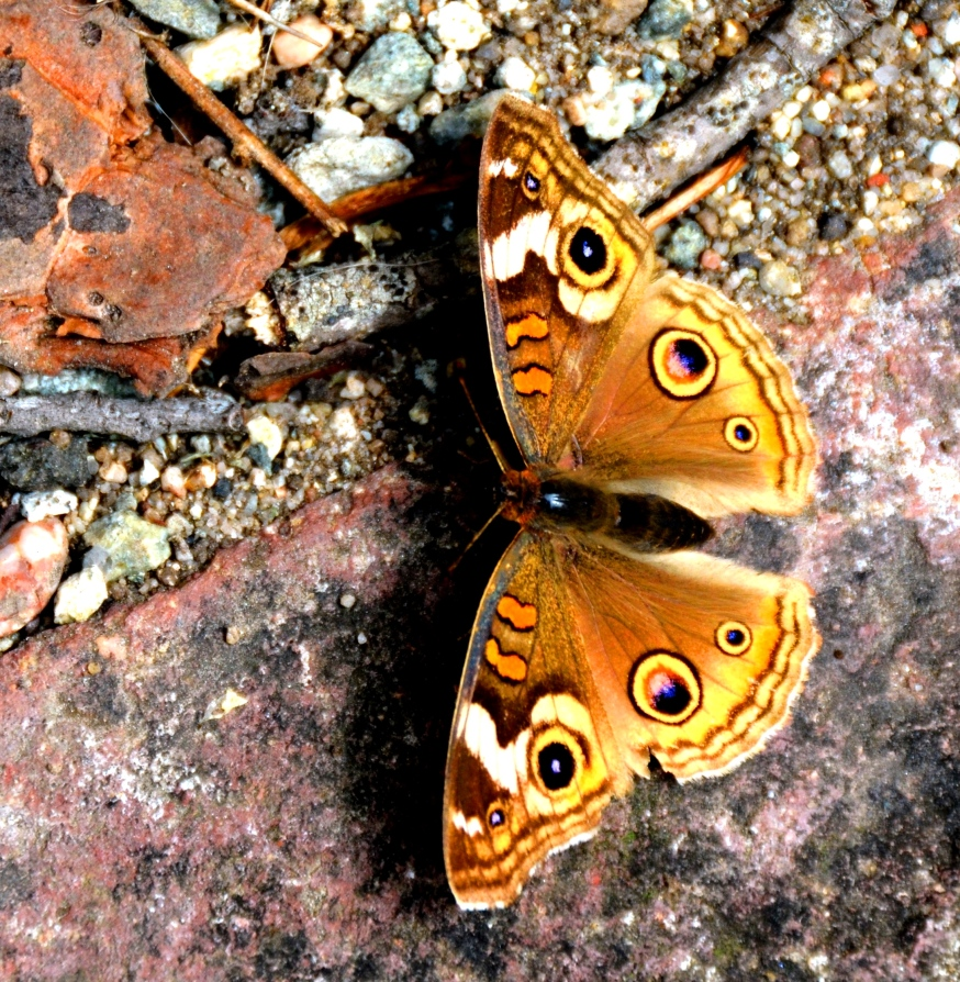 butterfly2 - Copy