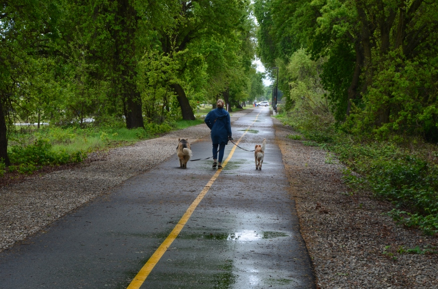dog walk.JPG