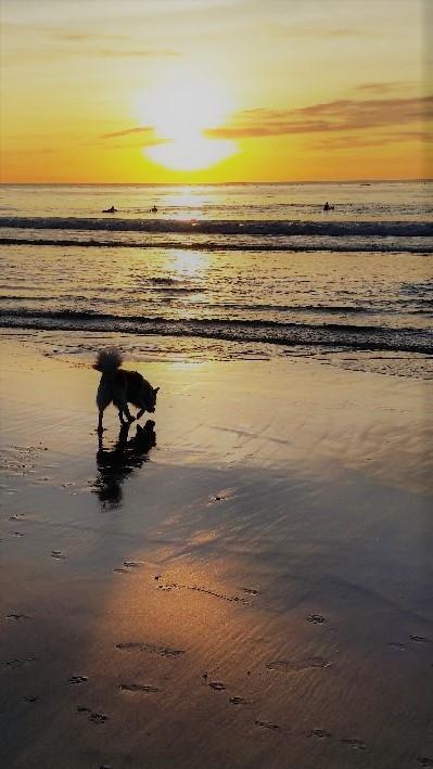 teddy at beach (2)