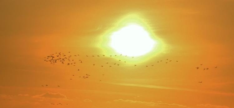 birds in sun.JPG