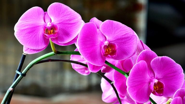 orchid - Copy.JPG