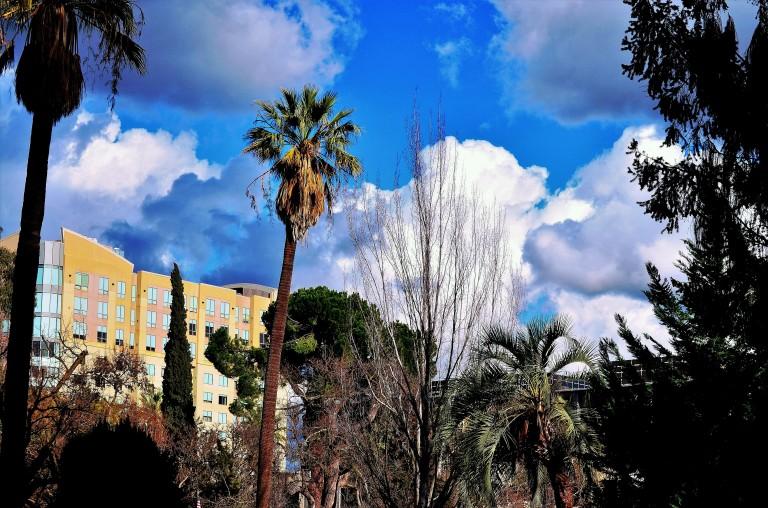 palm tree - Copy (2).JPG