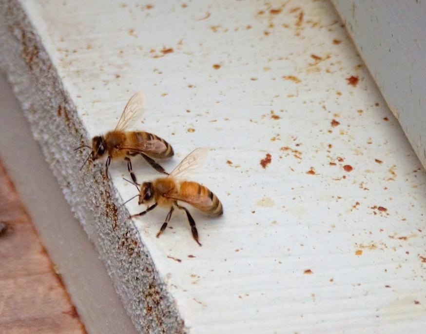 bees talk.jpg