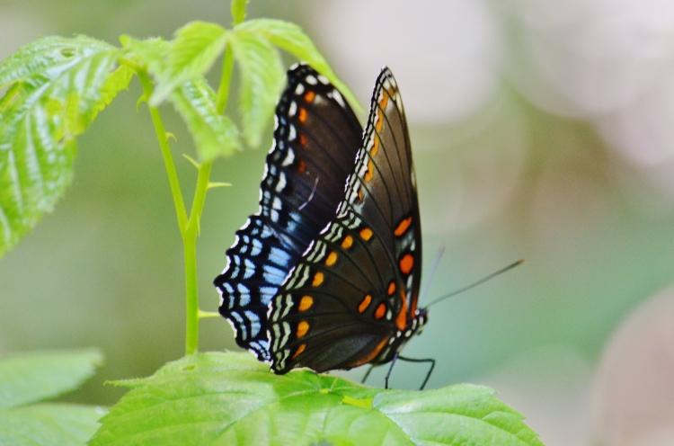 giant butterfly.JPG