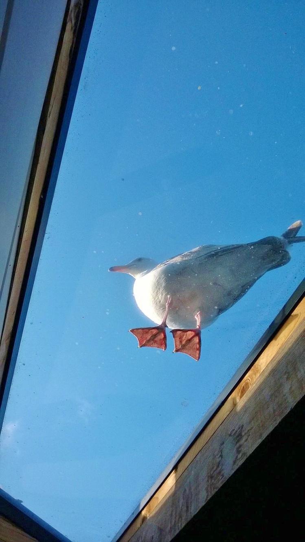 sea gull - Copy.jpg