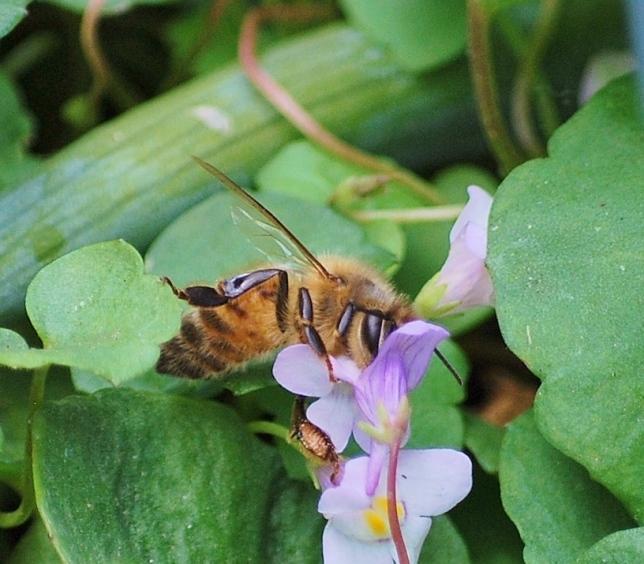 bee in kenilworth