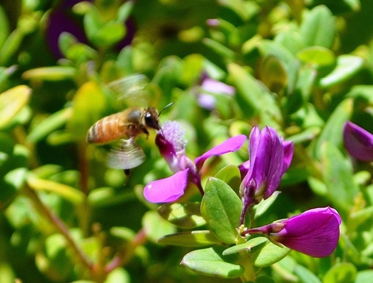 Honey bee speed