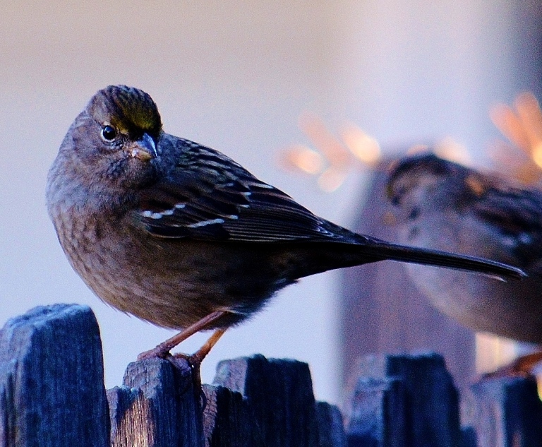 bird face2
