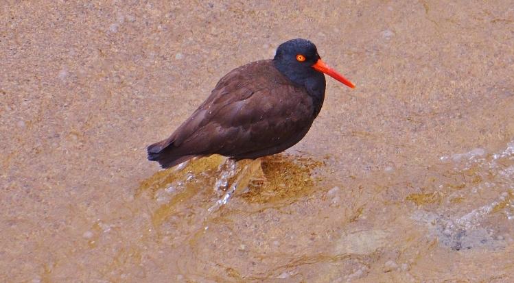 garapatta bird2 - Copy.JPG